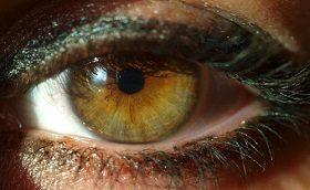 De Bijbel en het oog